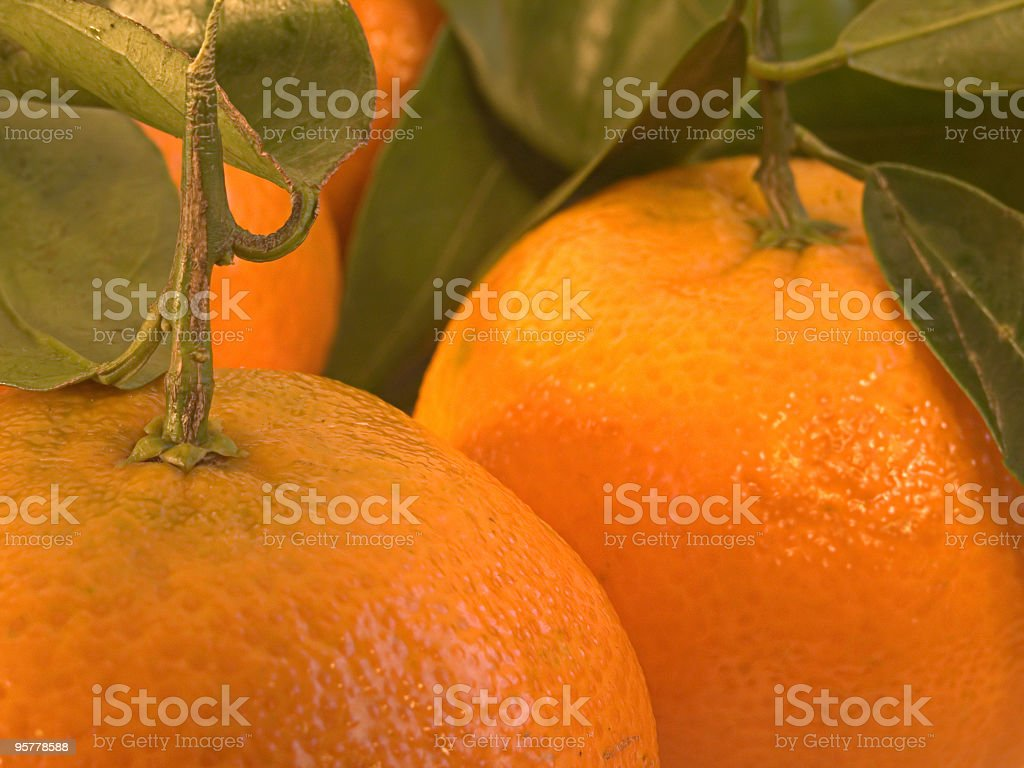 Juicy Clementines royalty-free stock photo