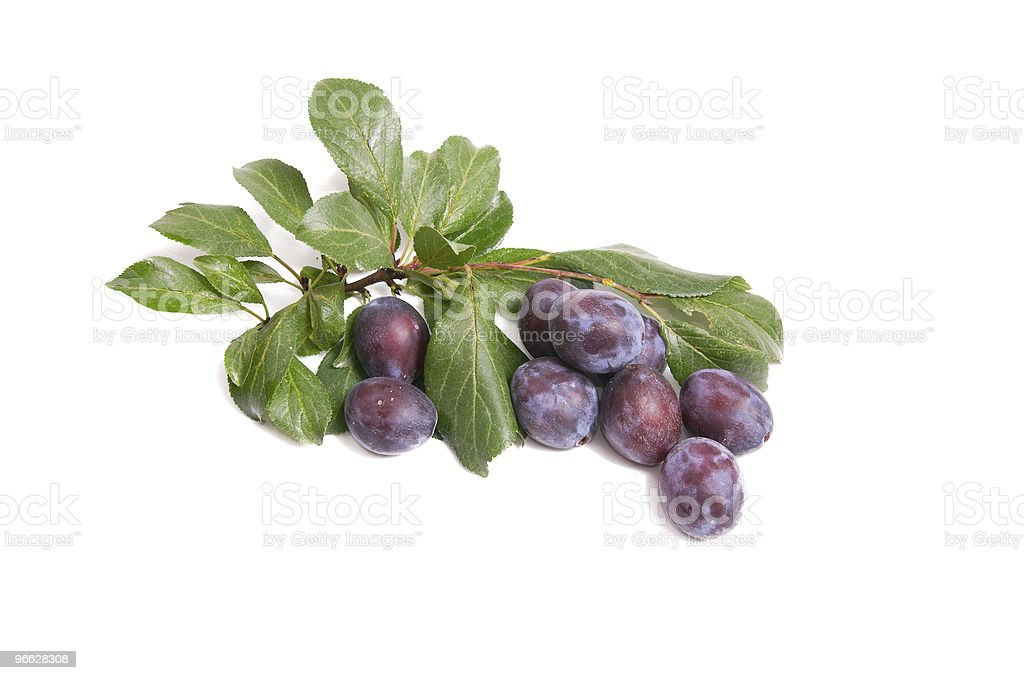 Juicy,tasty plums on a white. stock photo