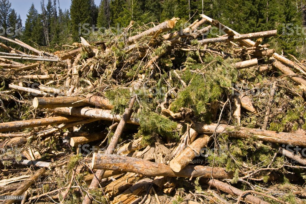 Jumble of Cut Logs Forestry. royalty-free stock photo
