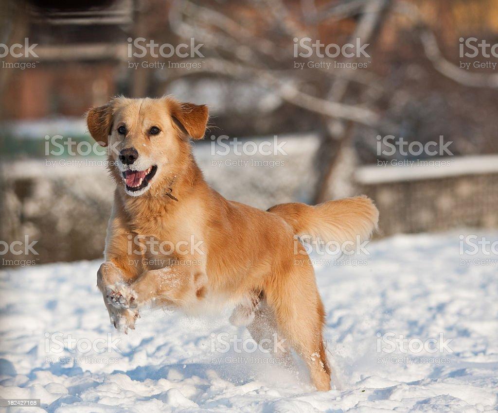 Jump around stock photo