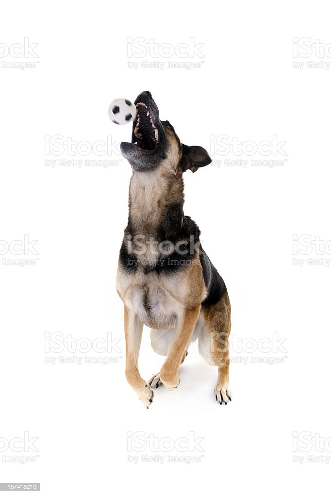 Jump ball royalty-free stock photo