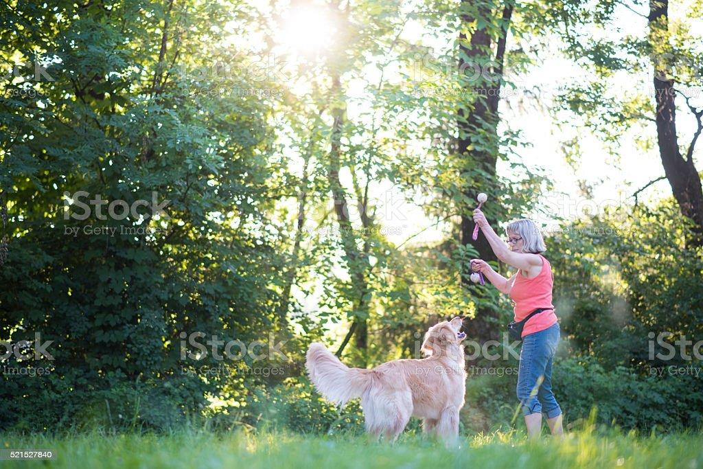 Jump dog, jump! stock photo