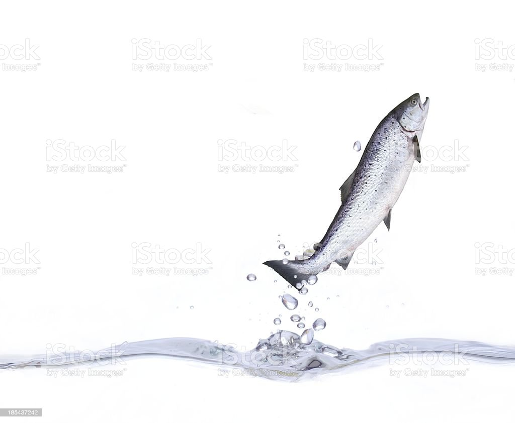 jump from water stock photo