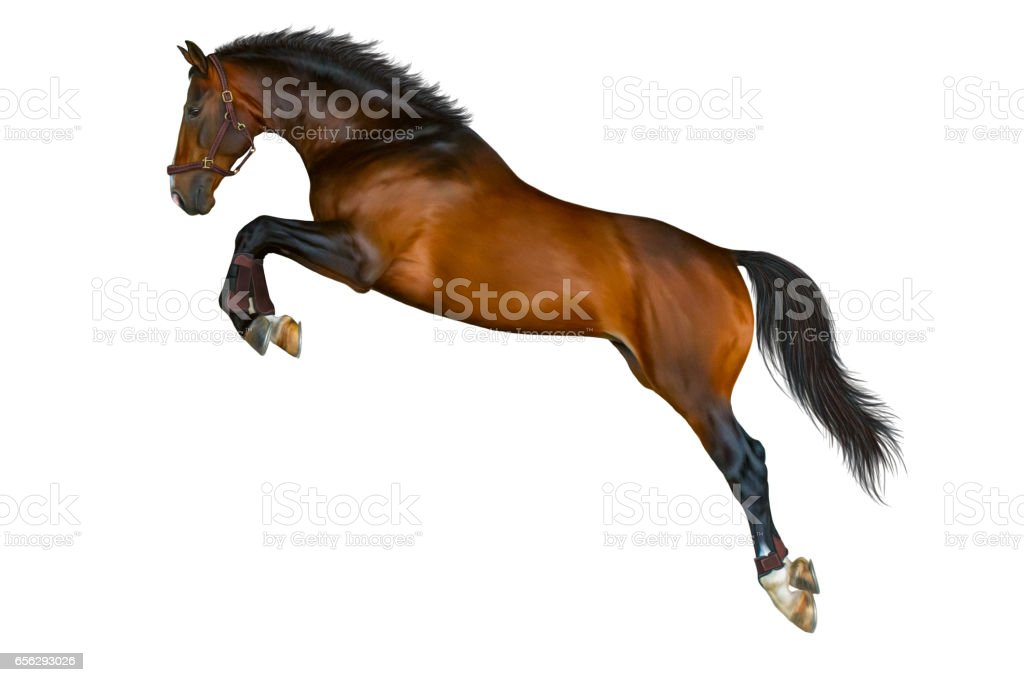 Jump of brown-bay horse. stock photo