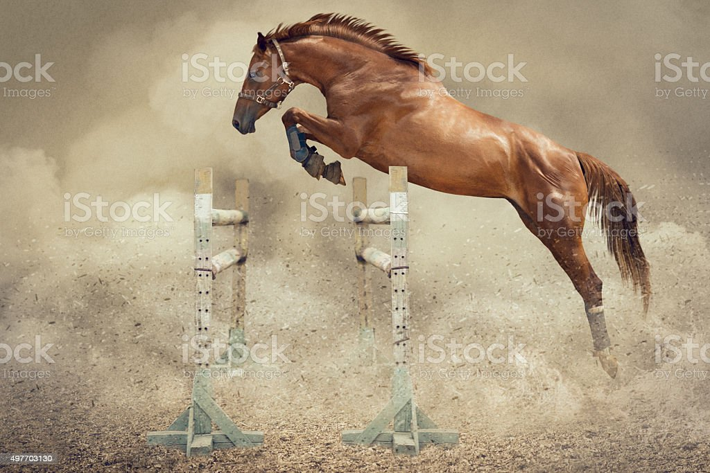 Jumper horse stock photo