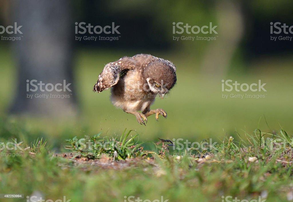 Jumping bird stock photo