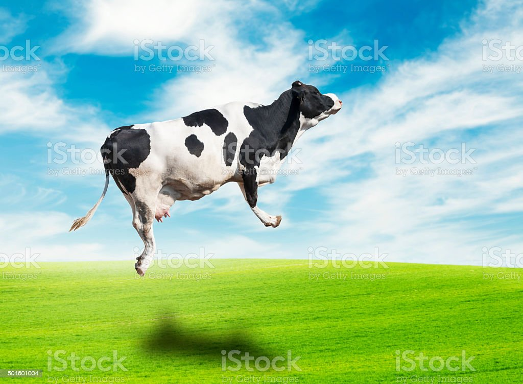 Jumping Cow stock photo