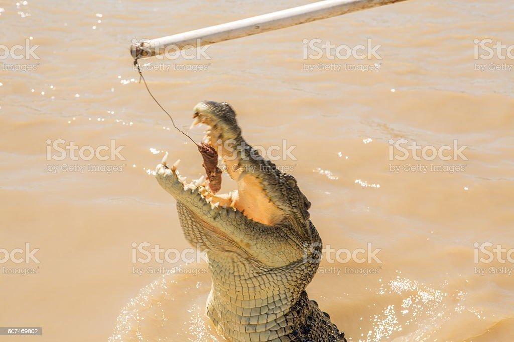 Jumping crocodile stock photo