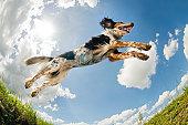 Jumping dog                                  (© Lobke Peers)