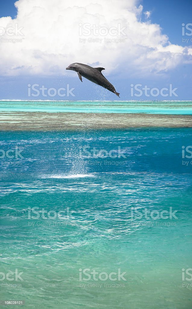 Jumping dolphin in turquoise lagoon stock photo