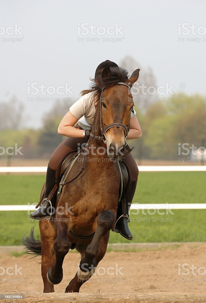 Jumping horse royalty-free stock photo