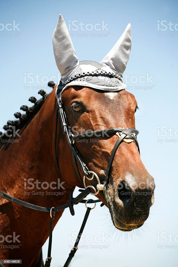 Jumping horse with white  headdress ear protection stock photo