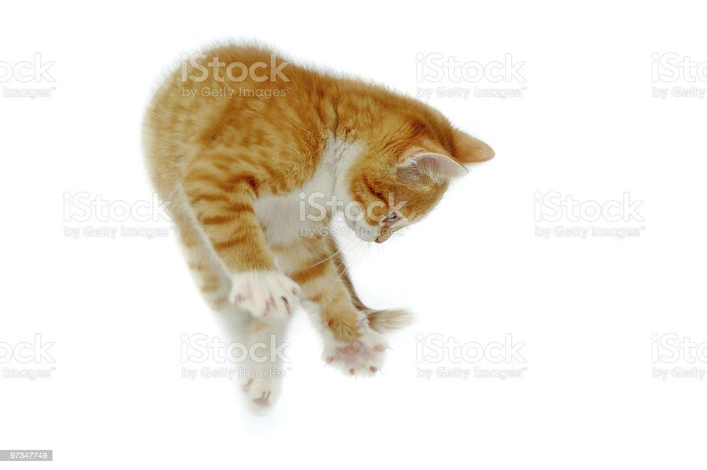 Jumping kitten royalty-free stock photo