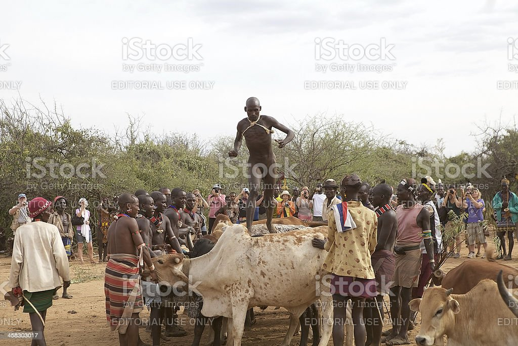 Jumping of the bull ceremony Ethiopia stock photo