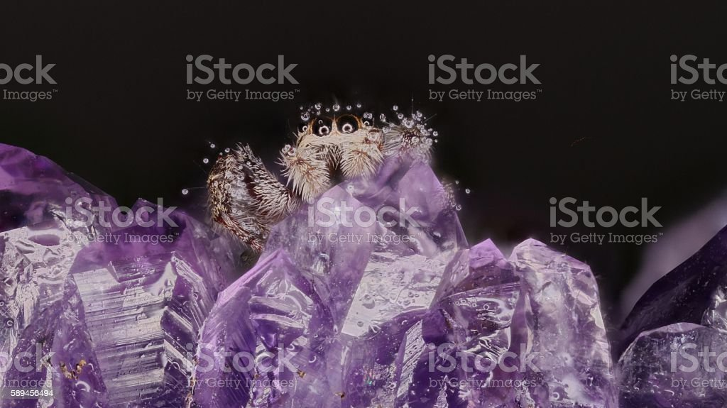 Jumping Spider (Salticidae) on an amethyst stock photo