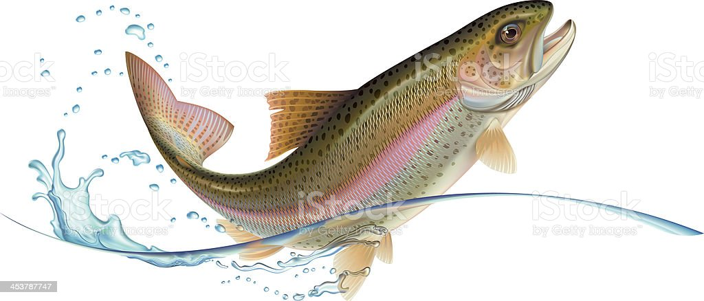 Jumping trout stock photo