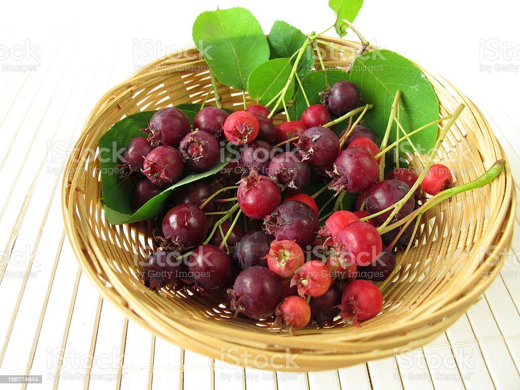 Juneberries in basket stock photo