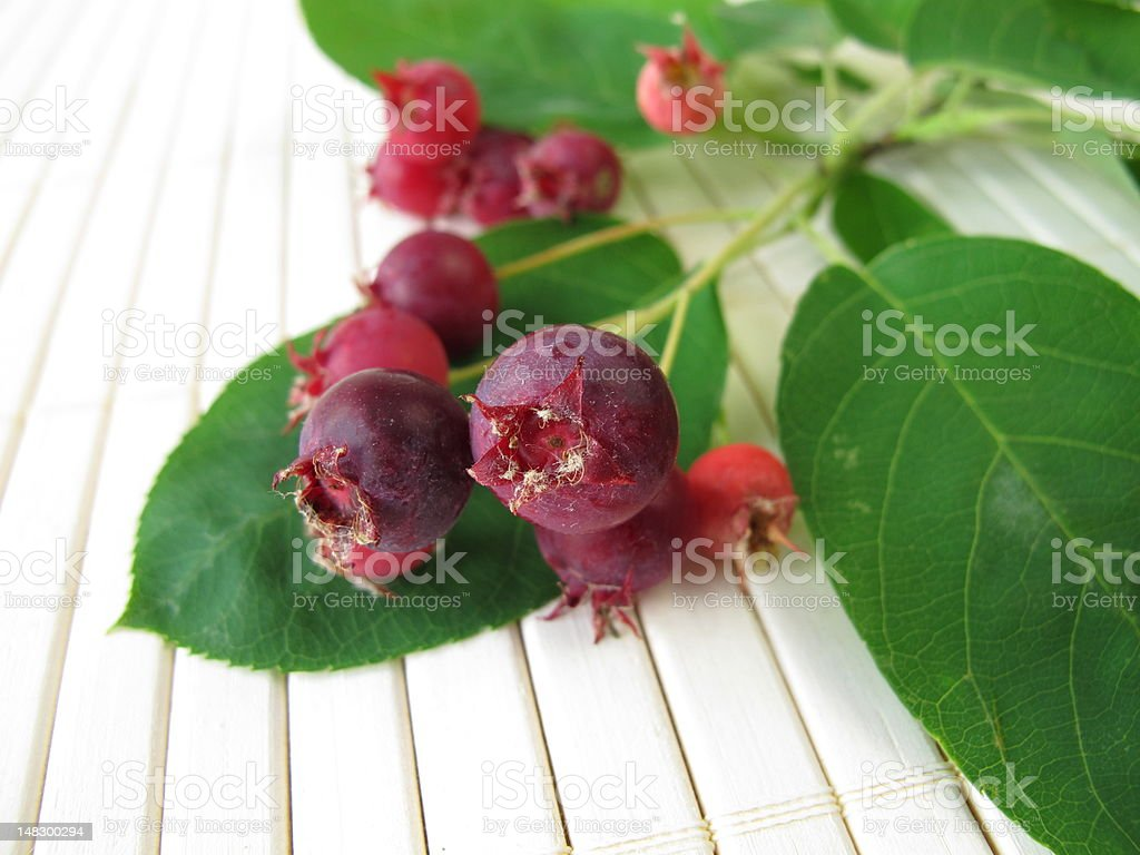 Juneberries stock photo