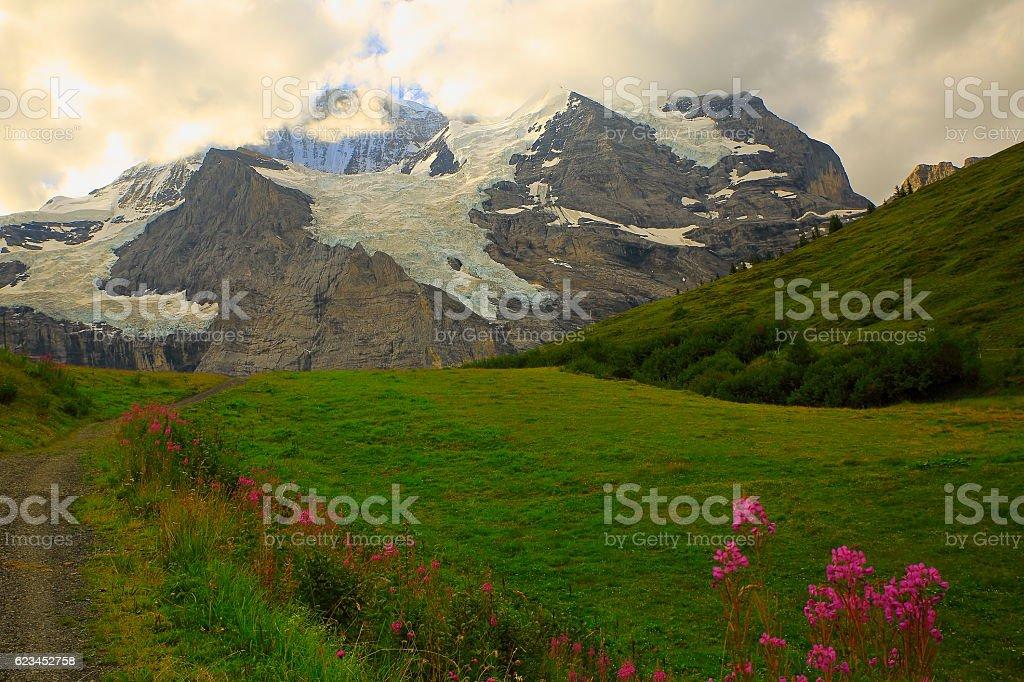 Jungfrau, Pink wildflowers above Lauterbrunnen valley, Bernese Oberland, Swiss Alps stock photo