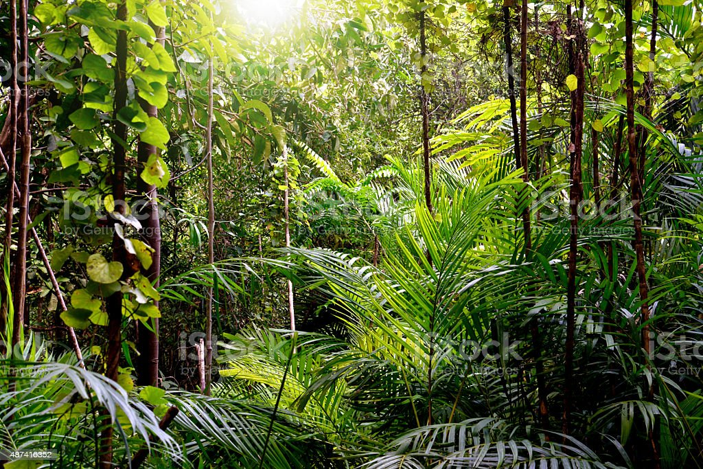 Jungle background, Krabi, Thailand stock photo