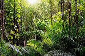 Jungle background, Krabi, Thailand