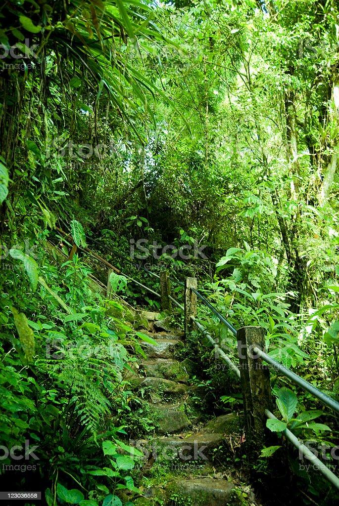 Jungle Background royalty-free stock photo