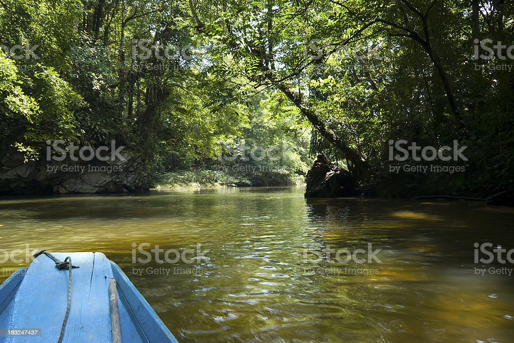 Jungle boat trip royalty-free stock photo