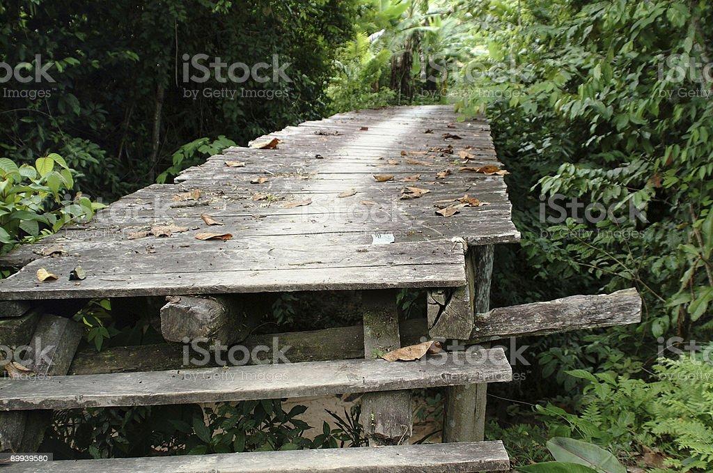 Jungle Bridge stock photo