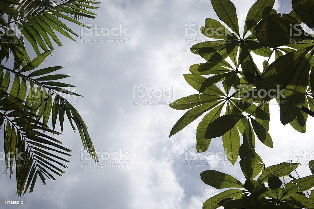 jungle canopy royalty-free stock photo