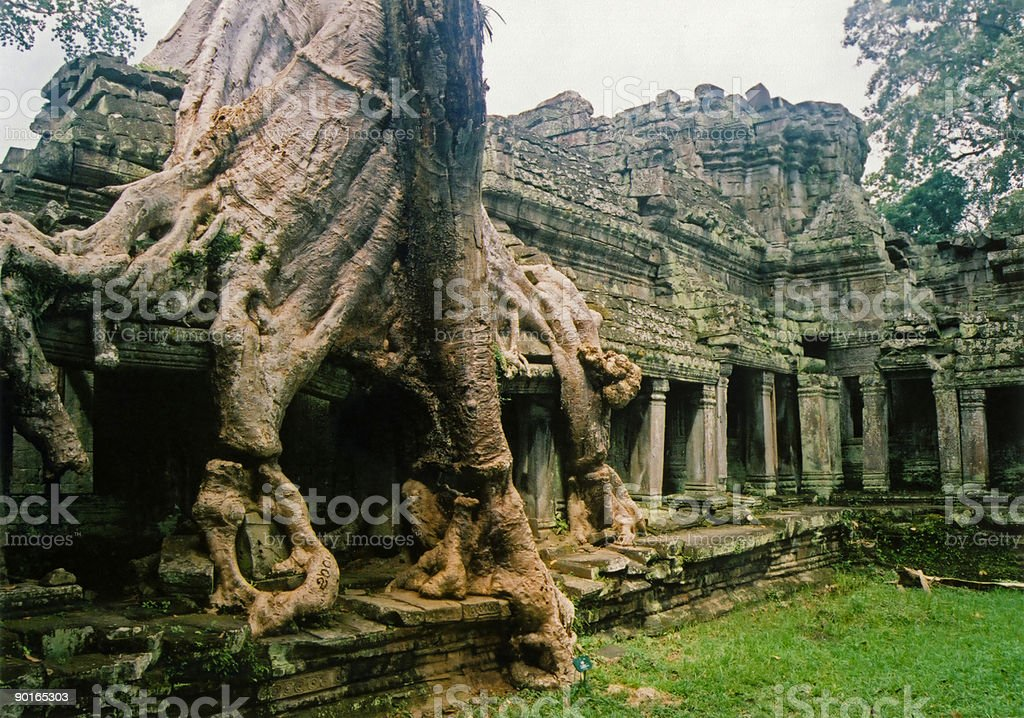 Jungle city angkor wat overgrown temple royalty-free stock photo