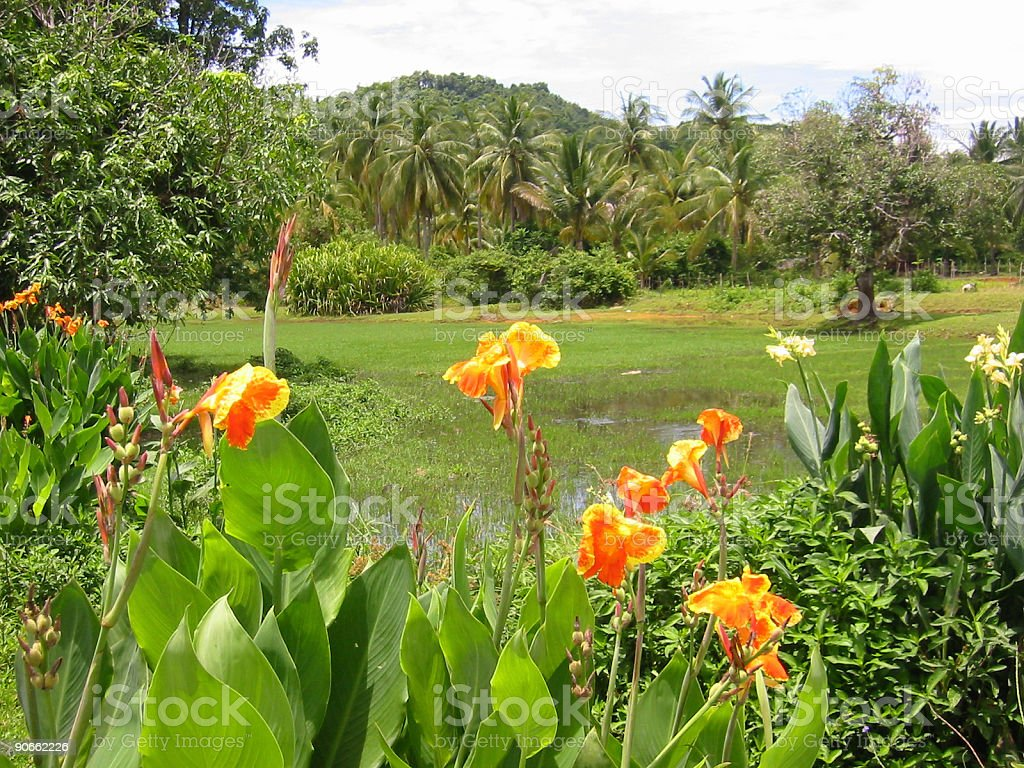 jungle clearing thailand royalty-free stock photo
