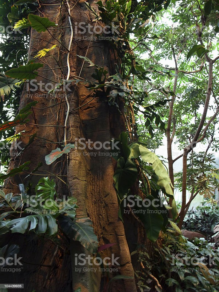 jungle detail with big stem royalty-free stock photo