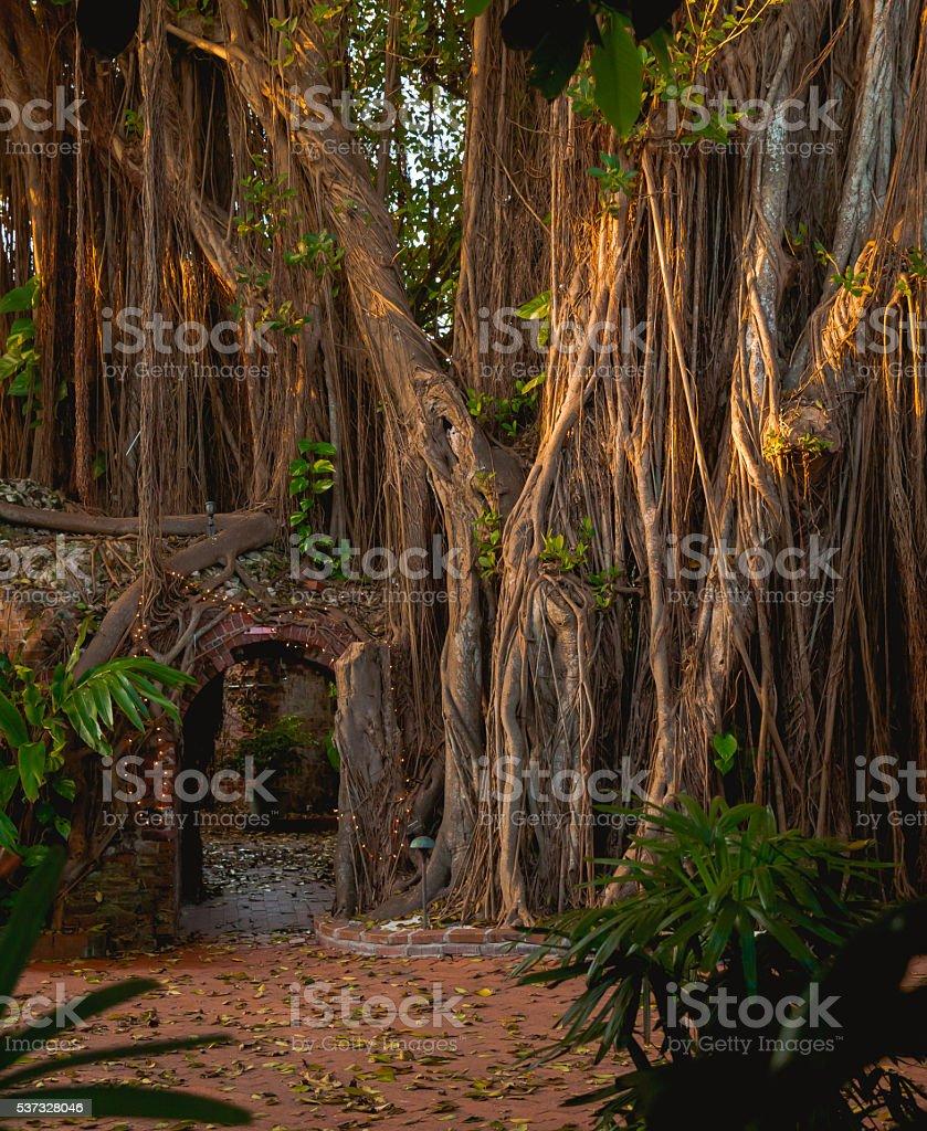 Jungle Door stock photo