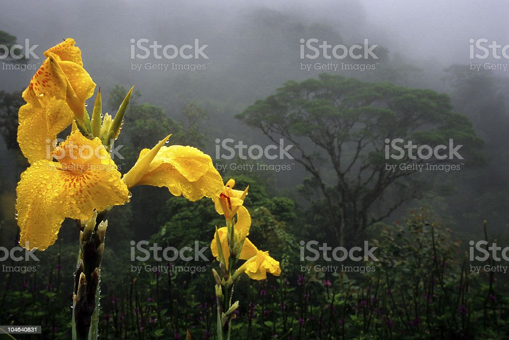 Jungle Flower royalty-free stock photo