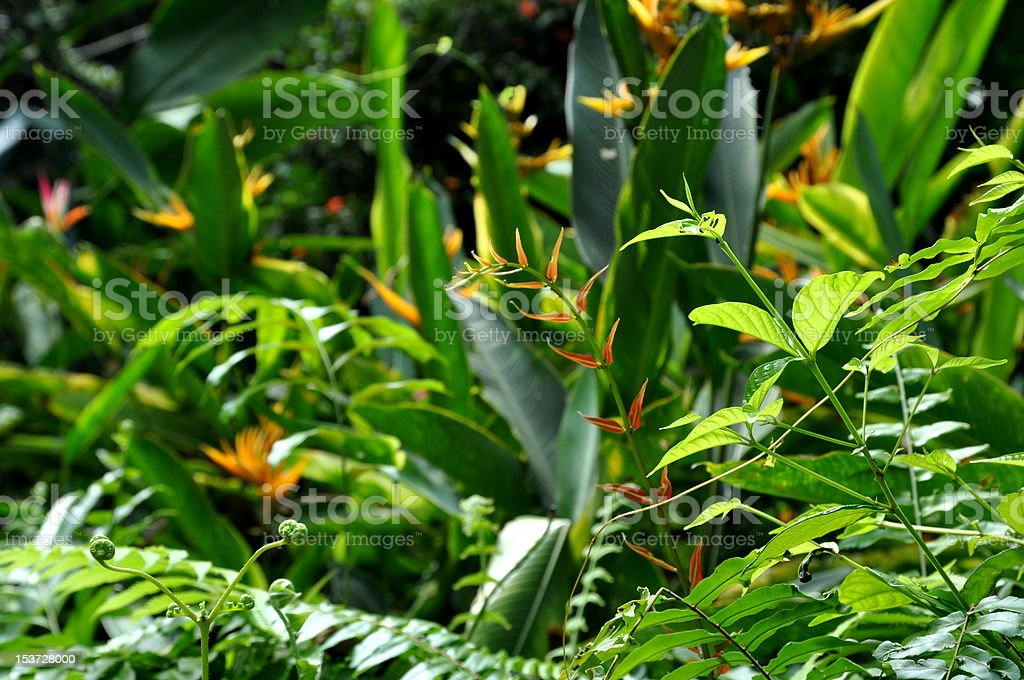 Jungle foliage stock photo