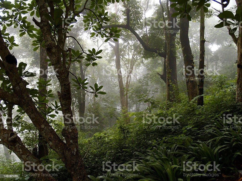 Jungle Hill royalty-free stock photo