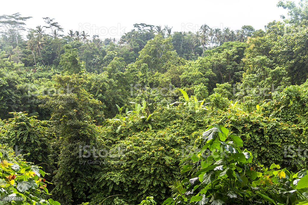 Jungle in monkey forest of Ubud, Bali stock photo