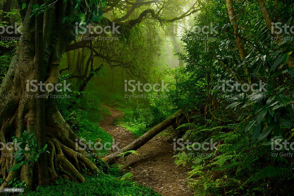 Jungla al norte de Tailandia stock photo