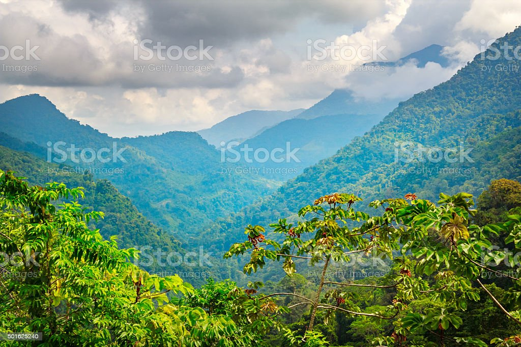 Jungle in Sierra Nevada Mountains in Colombia near Ciudad Perdida stock photo