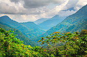 Jungle in Sierra Nevada Mountains in Colombia near Ciudad Perdida