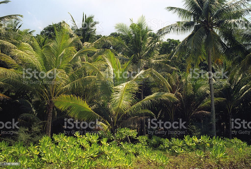 Jungle in Thailand royalty-free stock photo