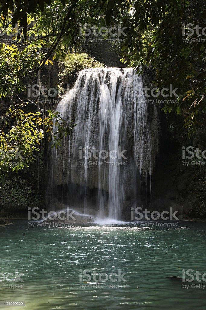 Jungle in Thailand stock photo