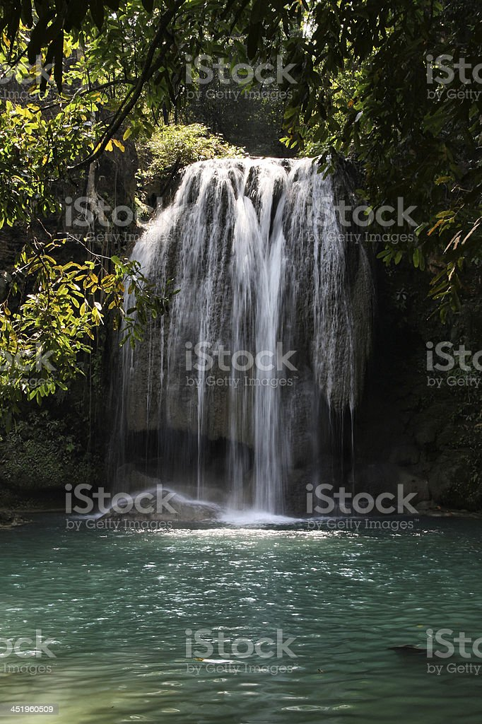 Jungle in Thailand stock photo