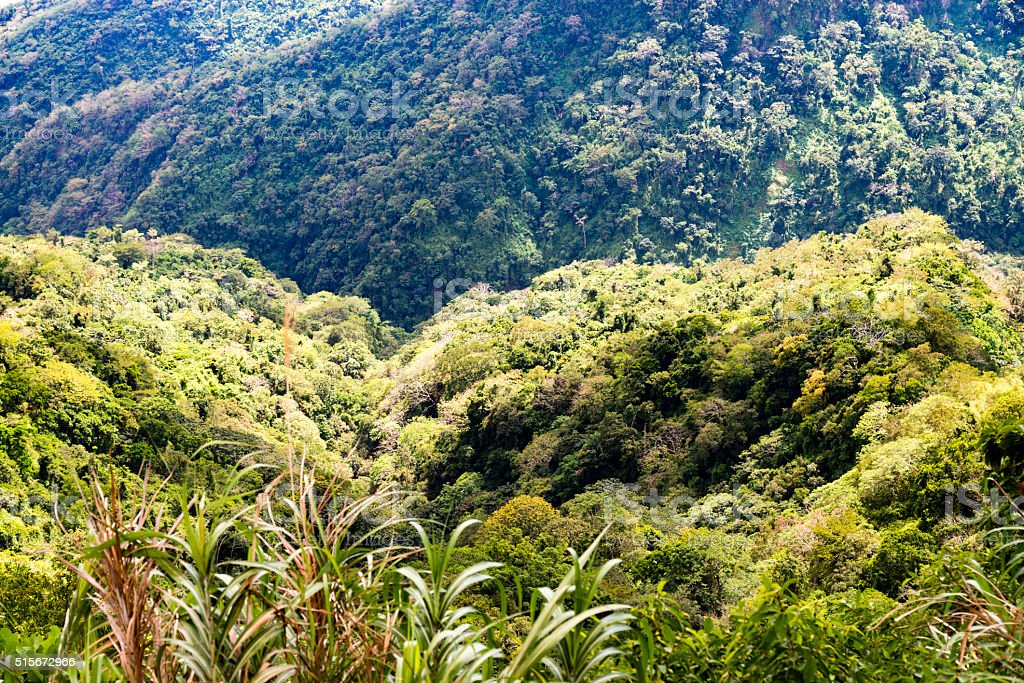 Jungle in the Philippines stock photo