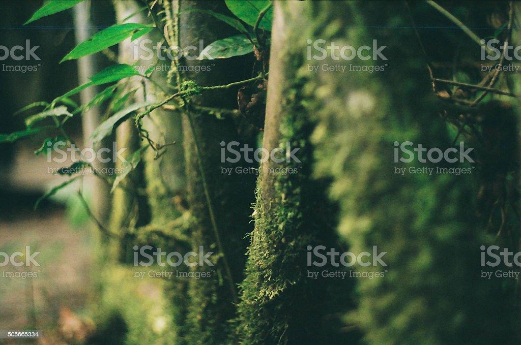 Jungle is alive stock photo