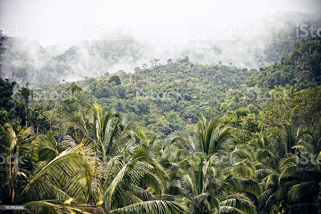 jungle mountains stock photo
