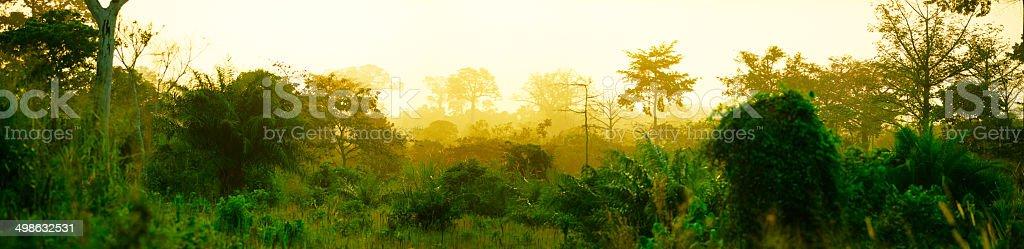 Jungle panorama stock photo