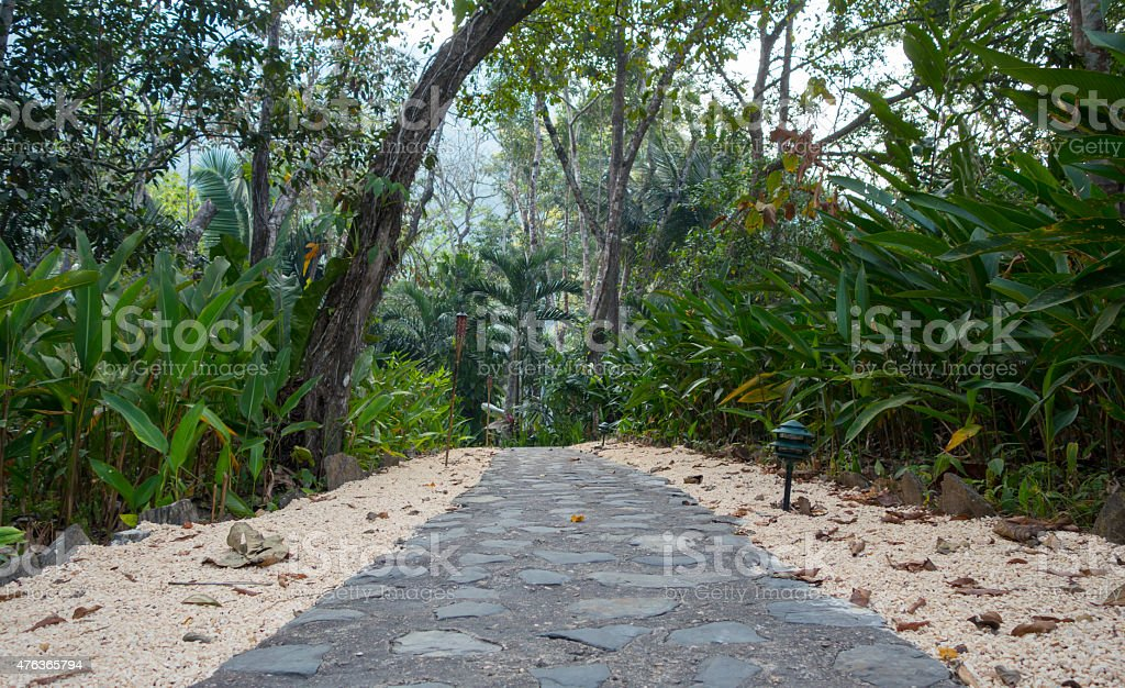 Jungle Path stock photo