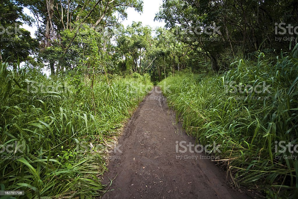 Jungle pathway royalty-free stock photo