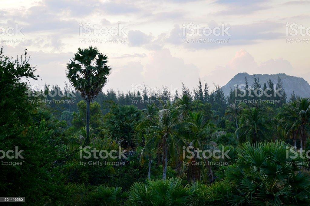 Jungle stock photo